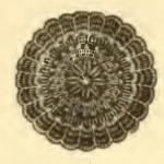 vintage-crochet-doily
