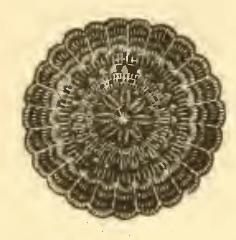 Vintage Crochet Doily Pattern #3