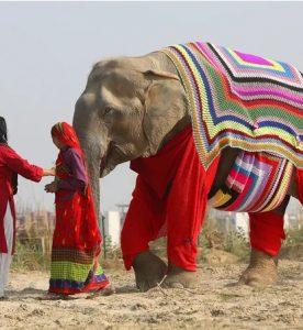 Elephant Jammies