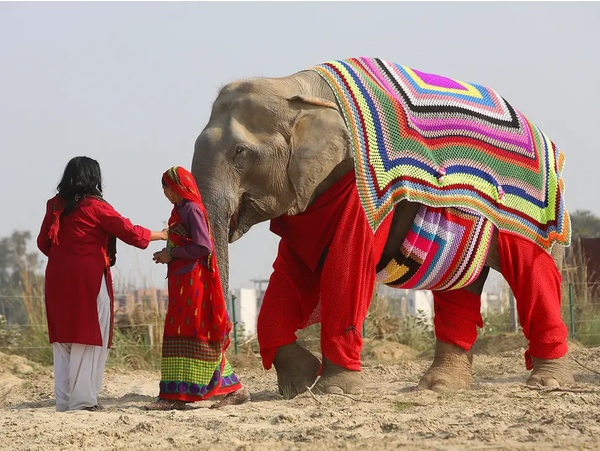 elephant jammies - elephant-sized knitted jumpers